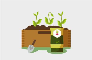 Planter ses radis