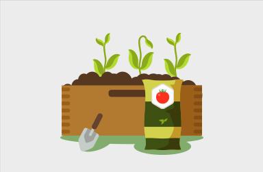 Planter ses tomates cerise